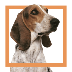 SFC_dog2